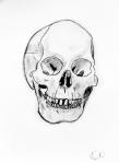 SkullStudy1